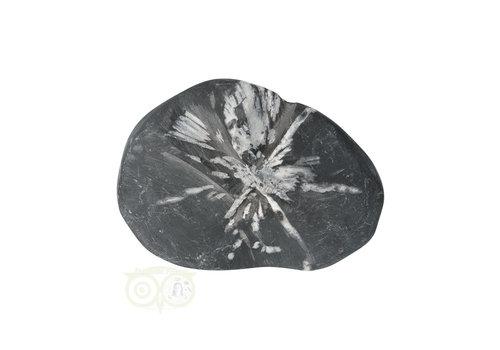 Chrysanthemum steen (Flower Stone) Nr 7
