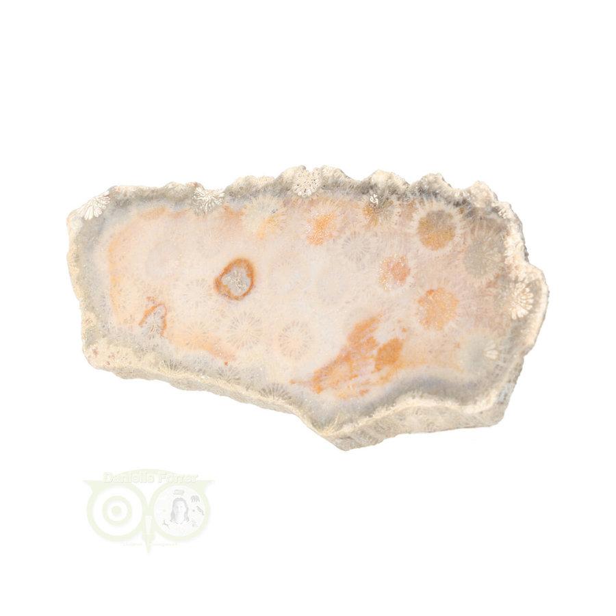 Fossiel Koraal schijf  Nr 8 - 70 gram - Java-3