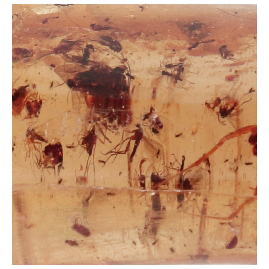 Copal - Barnsteen - Madagascar - Nr 8 - 36 gram-3