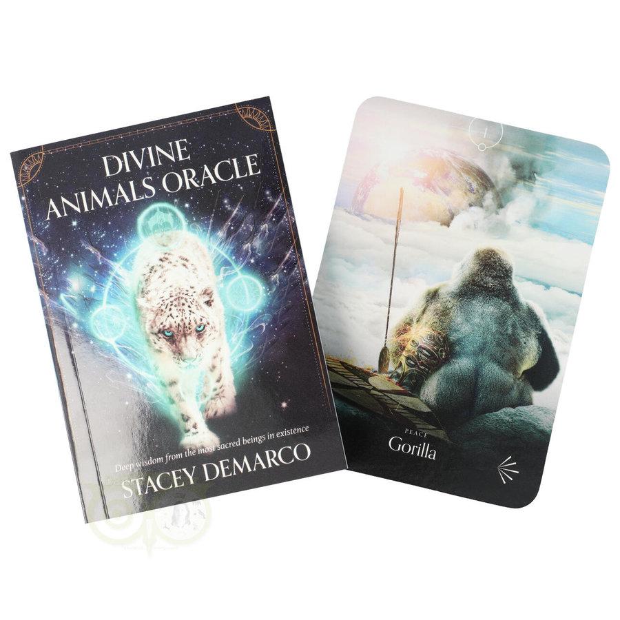 Divine Animals Oracle - Stacey Demarco-3