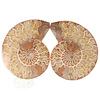 Ammoniet Fossiel paartje Nr 34 -372  gram
