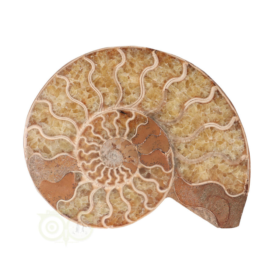 Ammoniet Fossiel paartje Nr 34 -372  gram-3