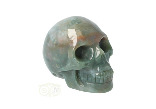 Mosagaat schedel Nr 14