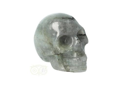 Labradoriet schedel Nr 8