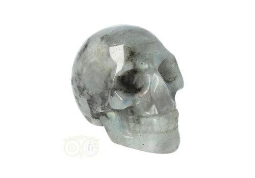 Labradoriet schedel Nr 9