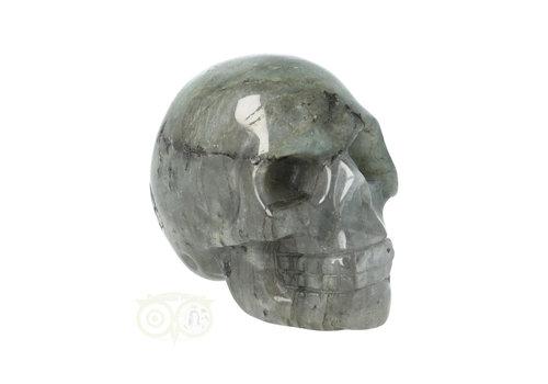 Labradoriet schedel Nr 10