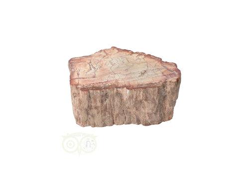 Versteend houten stam nr 37