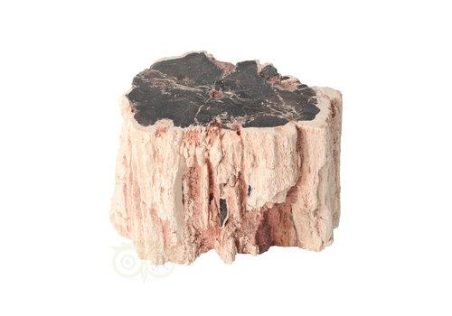 Versteend houten stam nr 38