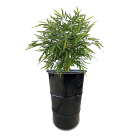 Barrelkings Barrel planter, Flowerbox 120 L oildrum with grout tub