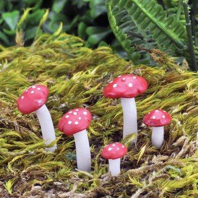 Fiddlehead Fiddlehead - Fly Agaric Mushrooms
