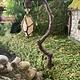 Fiddlehead Hanging Swamp Lantern