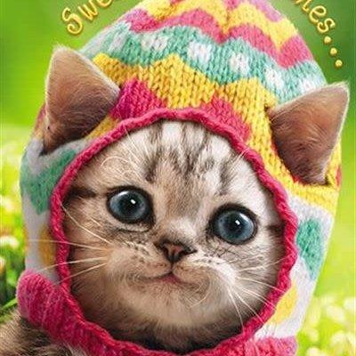 Avanti Easter Greeting Card - Kitten in Knitted Egg Cap