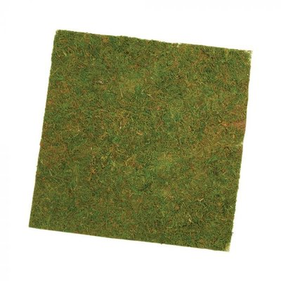 Oasis Mossed Sheet 40x40x0.5cm