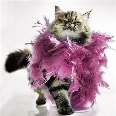 Cat with Feather Boa - 3D Effect Card
