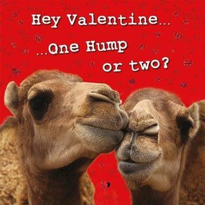 Kissing Camels Valentines Card