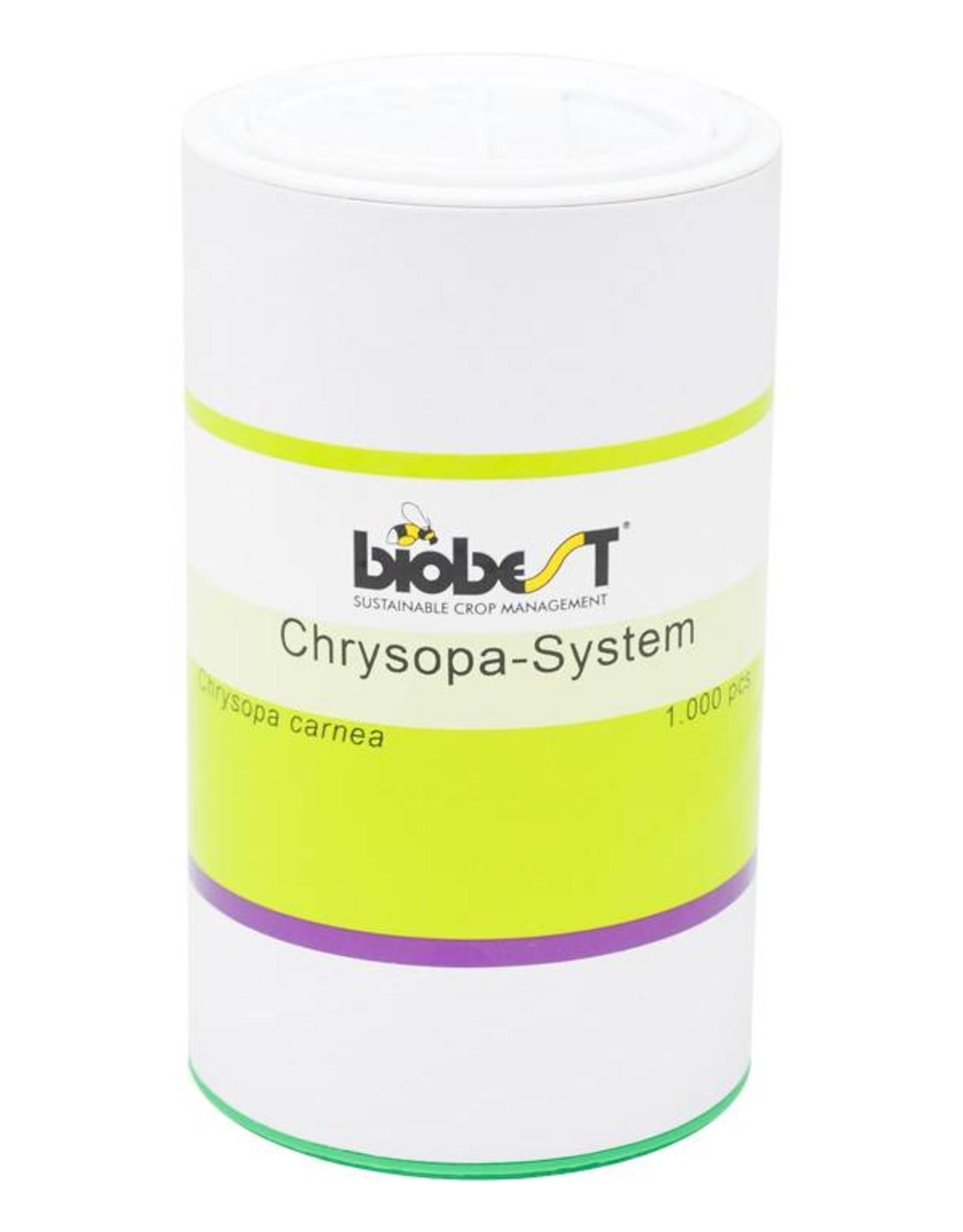 Brimex Biobest Wolluis bestrijden met gaasvlieg Chrysopa