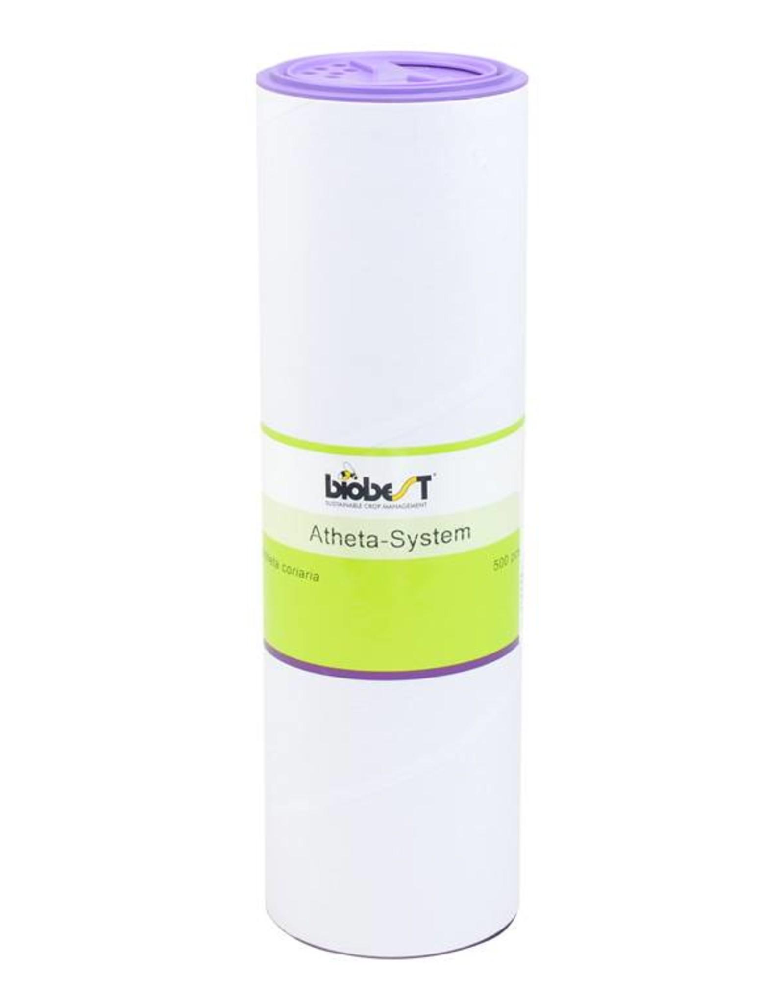 Brimex Biobest Oevervlieg bestrijden met roofkever Atheta coriaria
