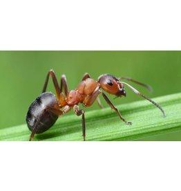 Brimex Mieren verdrijven met biologische vetzuren