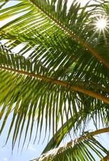 Brimex Biobest Palmsnuitkever (rode) bestrijden met nematoden