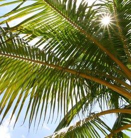 Brimex Biobest Palmsnuitkever bestrijden met nematoden