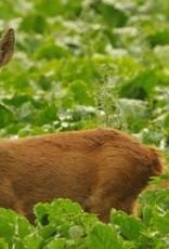 Brimex Tupoleum Tupoleum koker tegen reeën en konijnen 100% afbreekbaar