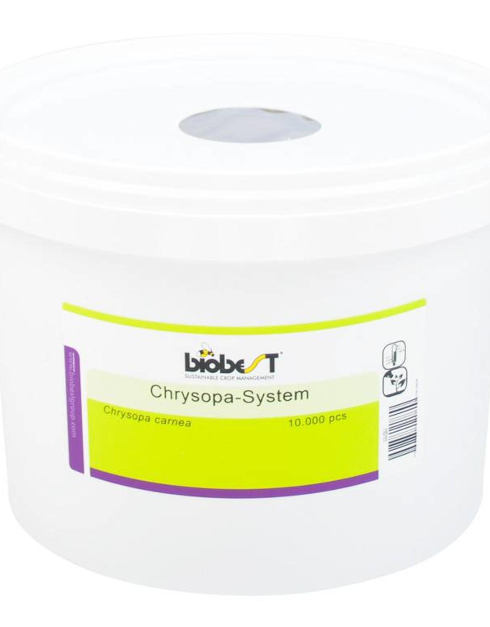Brimex Biobest Gaasvlieg Brimex Chrysopa carnea System