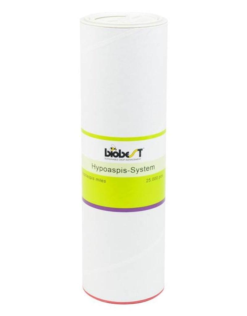 Brimex Biobest Bodemroofmijt Brimex Hypoaspis miles System