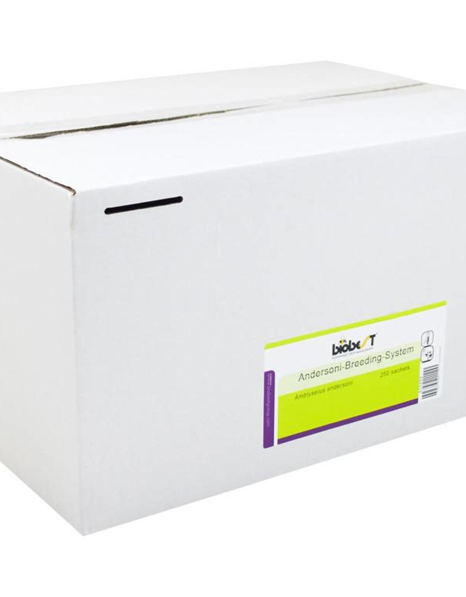 Brimex Biobest Roofmijt Brimex Andersoni Breeding System