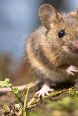 Brimex Tupoleum Muizen & Ratten verdrijven met geur