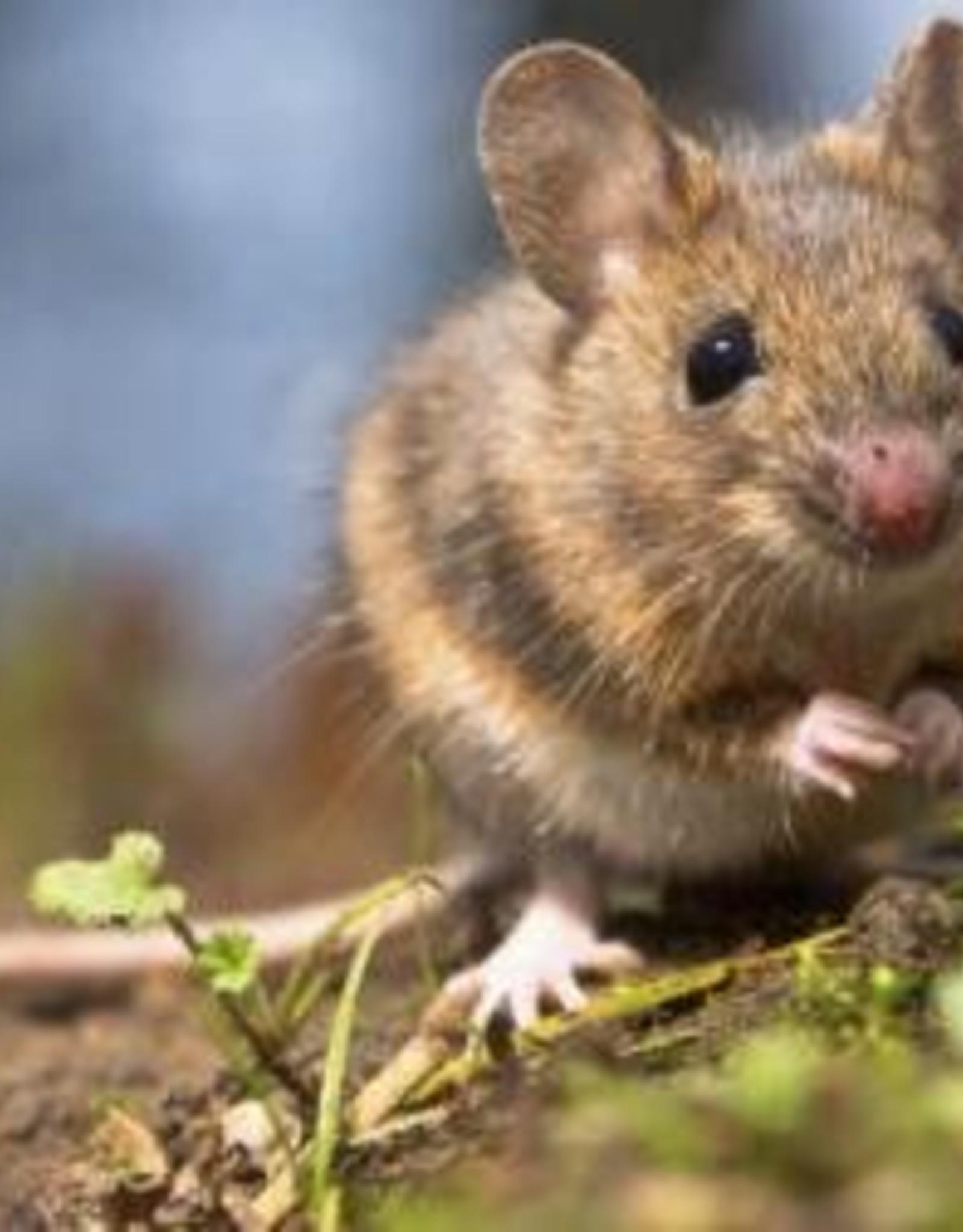 Brimex Tupoleum Muizen & Ratten weren met geur