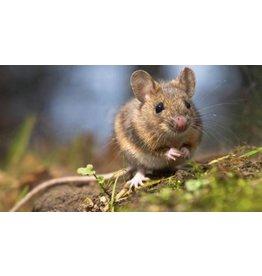 Brimex Tupoleum Muizen & Ratten verjagen met geur