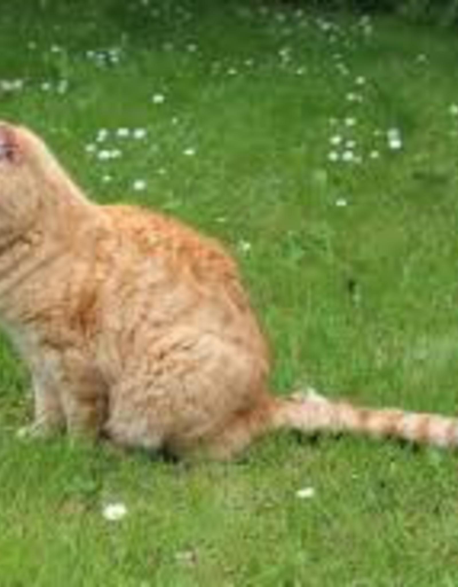 Brimex Tupoleum Katten weren met Brimex geurpaal tegen o.a. katten en konijnen