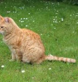 Brimex Tupoleum Katten weren met geur