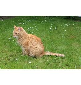 Brimex Tupoleum Katten verjagen met geur