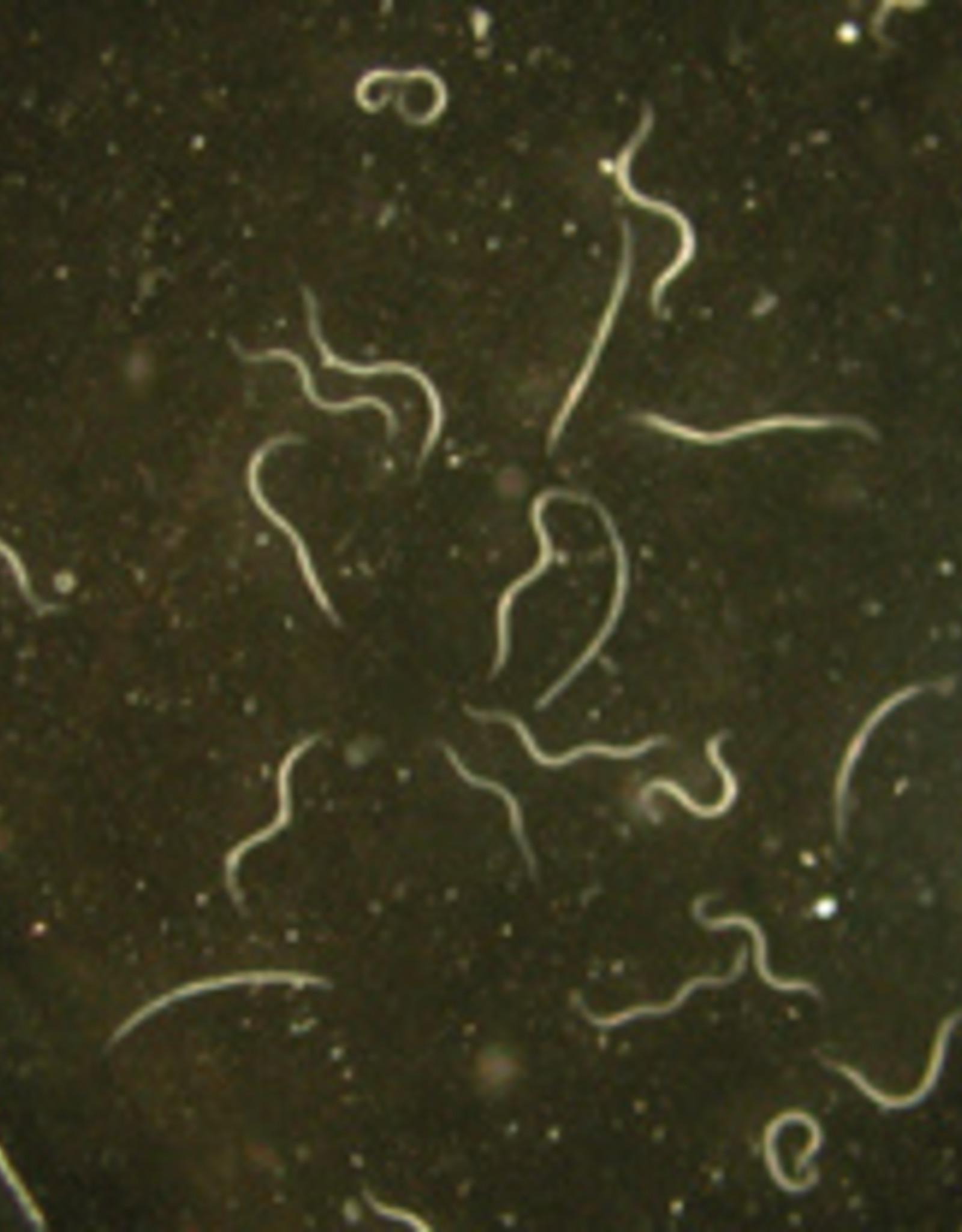 Brimex Biobest Teken bestrijden met Brimex Aaltjes