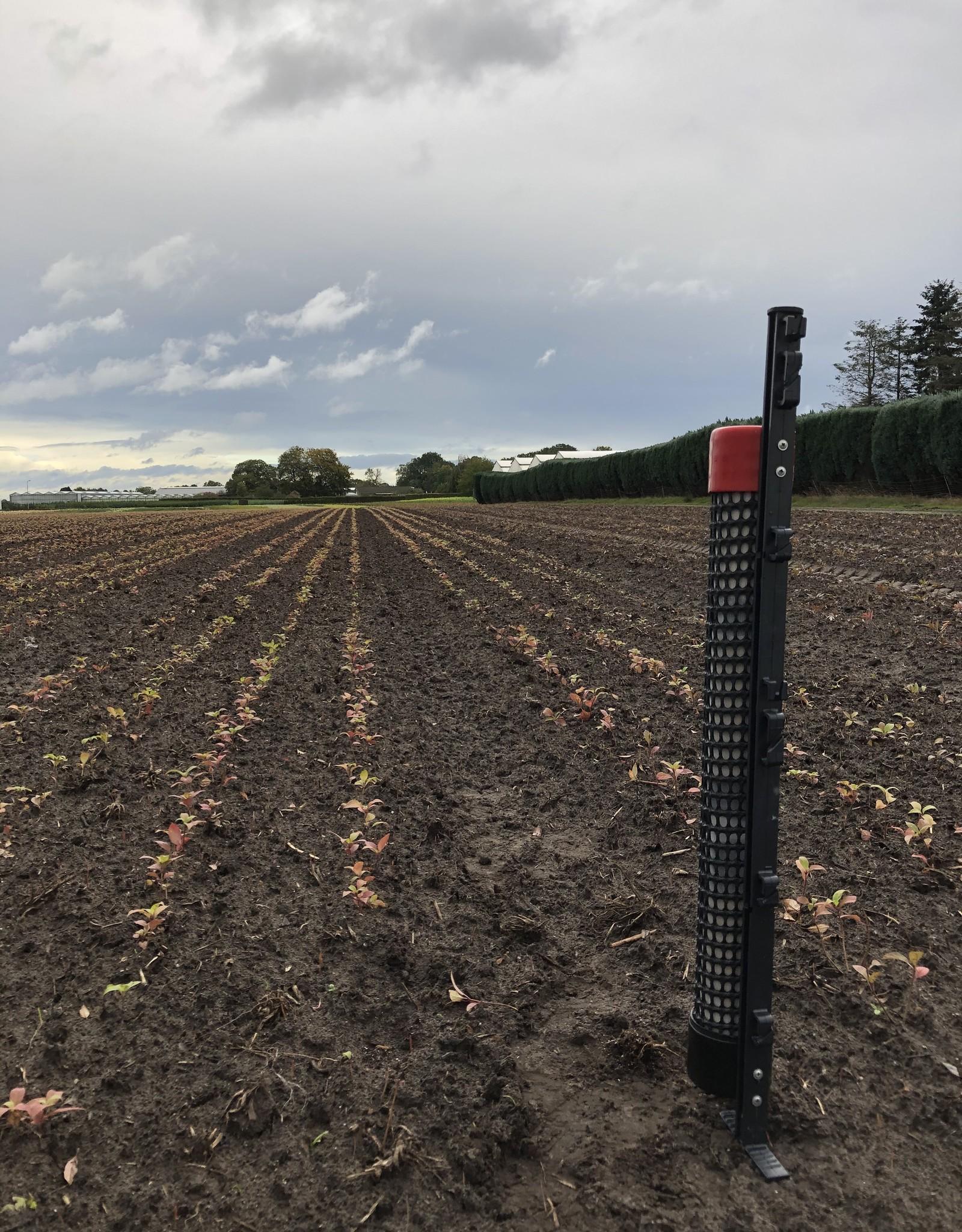Brimex Tupoleum Tupoleum Pro1 groot wild geurpalenset 0,5 hectare