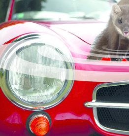 Brimex SWISS INNO SUPERCAT Marter Stop Auto