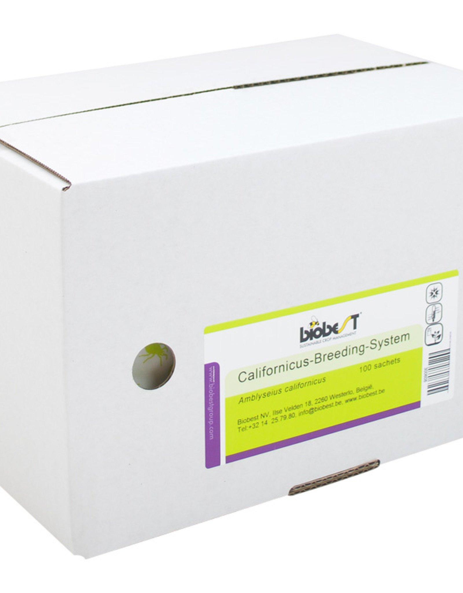 Brimex Biobest Roofmijt Brimex Californicus Breeding System