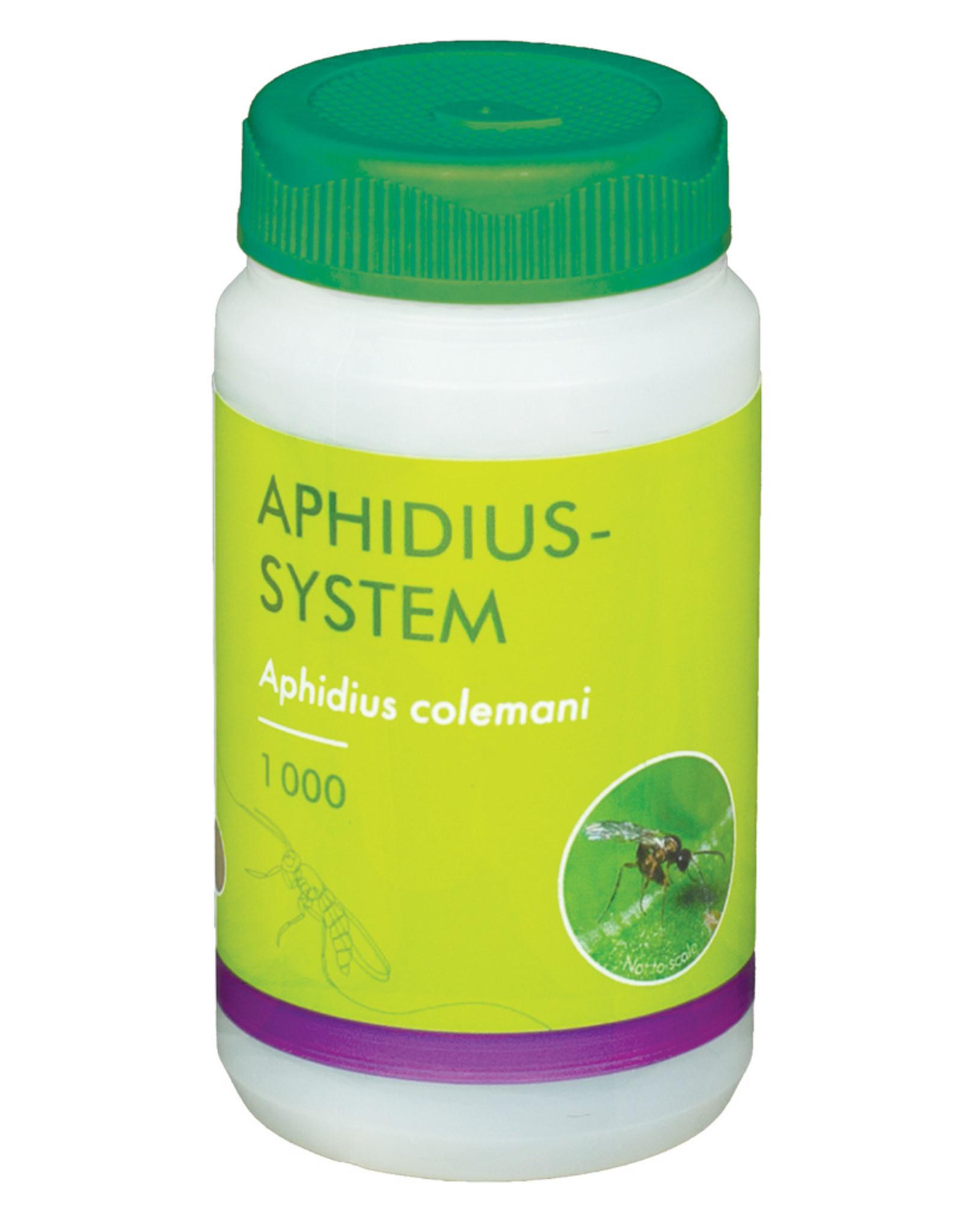 Brimex Biobest Aphidius System sluipwesp voor bestrijding bladluis, katoenluis en perzikluis