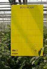 Brimex Biobest Brimex Bug Scan vangstrook geel 25 X 10 cm  20 stuks