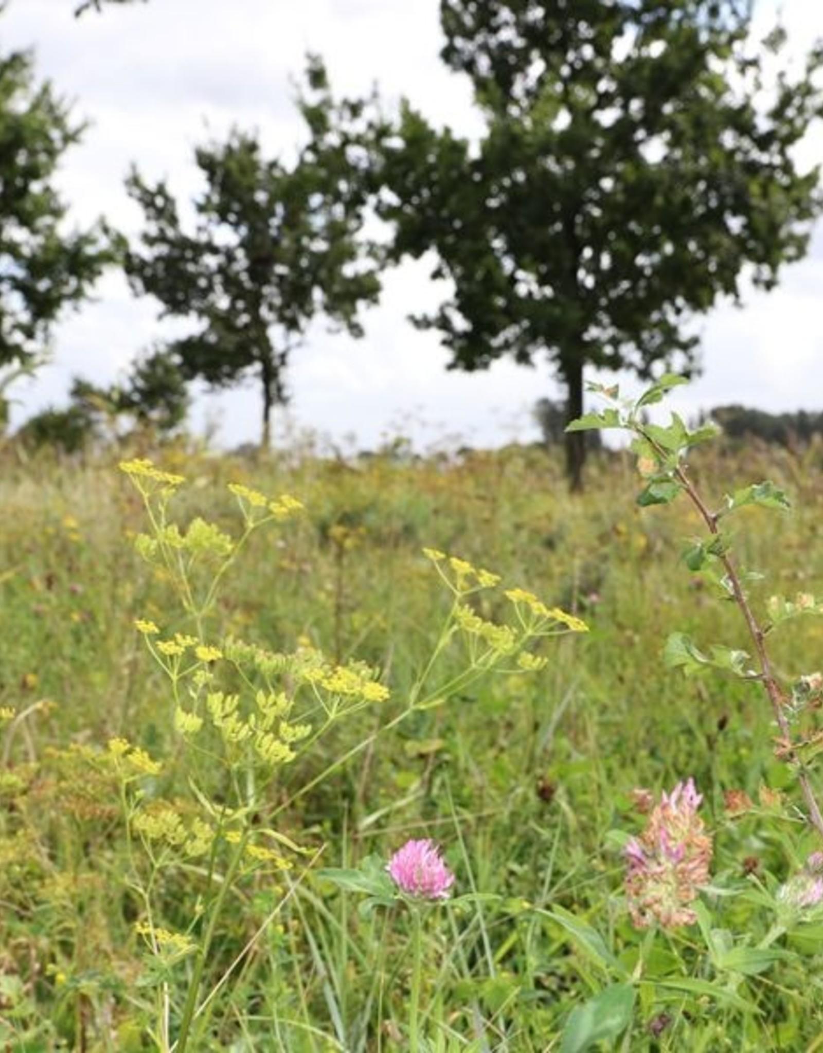 Brimex Innogreen Eikenprocessierups bestrijden met meerjarig bloemmengsel