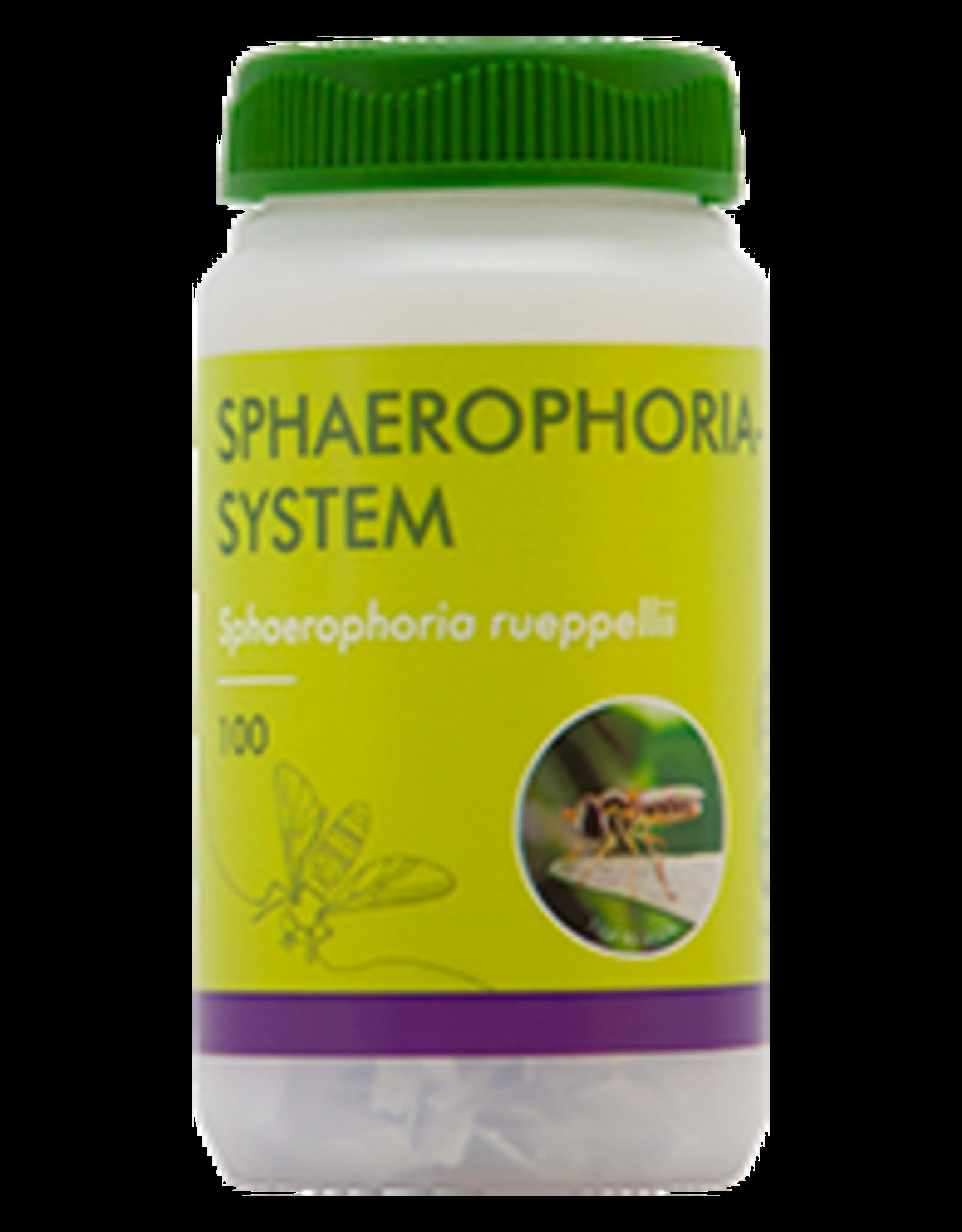 Brimex Biobest Bladluis bestrijding met Brimex zweefvlieg Sphaerophoria-System