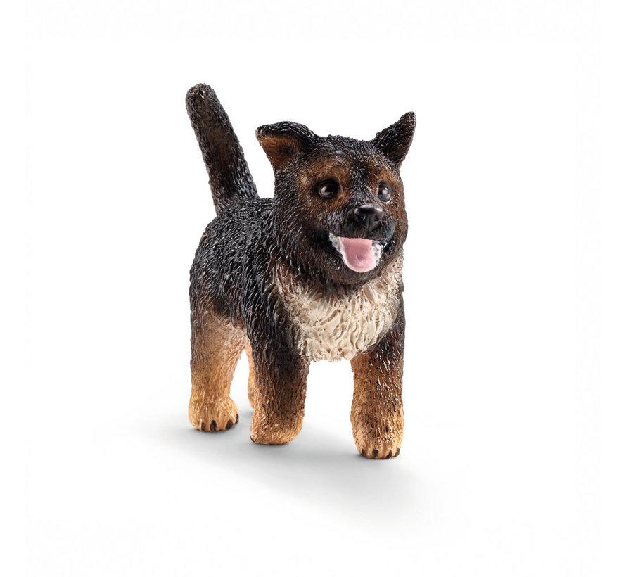 Hond Jonge Duitse Herder 16832