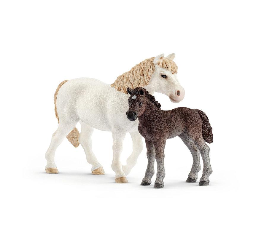 Pony En Veulen 42423
