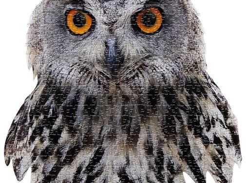 Madd Capp Puzzel Uil I AM Owl 550 pcs