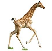 Madd Capp Puzzle Jr.: I AM Lil' Giraffe
