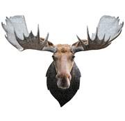 Madd Capp Puzzel Eland I AM Moose Poster Size 700pcs