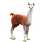 Madd Capp Puzzel Lama I AM Lil'  Llama 100pcs