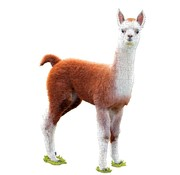 Madd Capp Puzzle Jr.: I AM Lil' Llama 100pcs