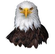 Madd Capp Puzzel Arend I AM Eagle 300pcs